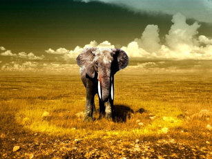 Картинка животные слоны