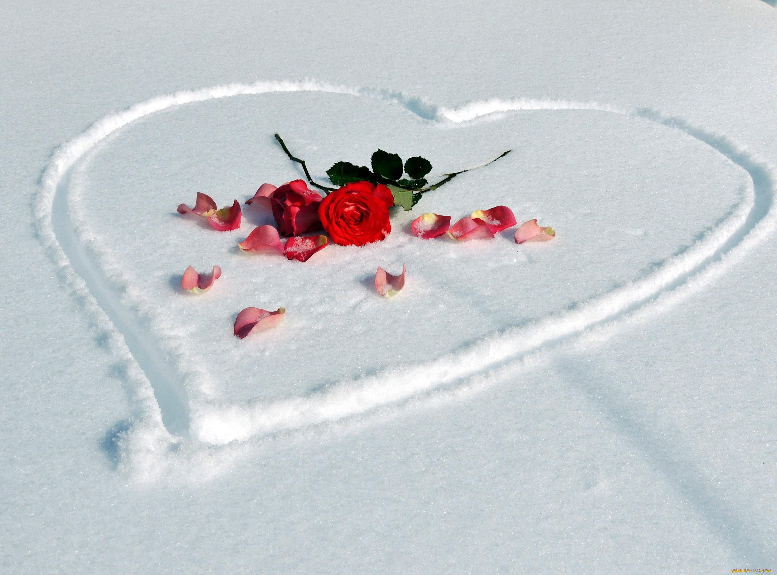 Открытки на снегу, маки сирии анимация