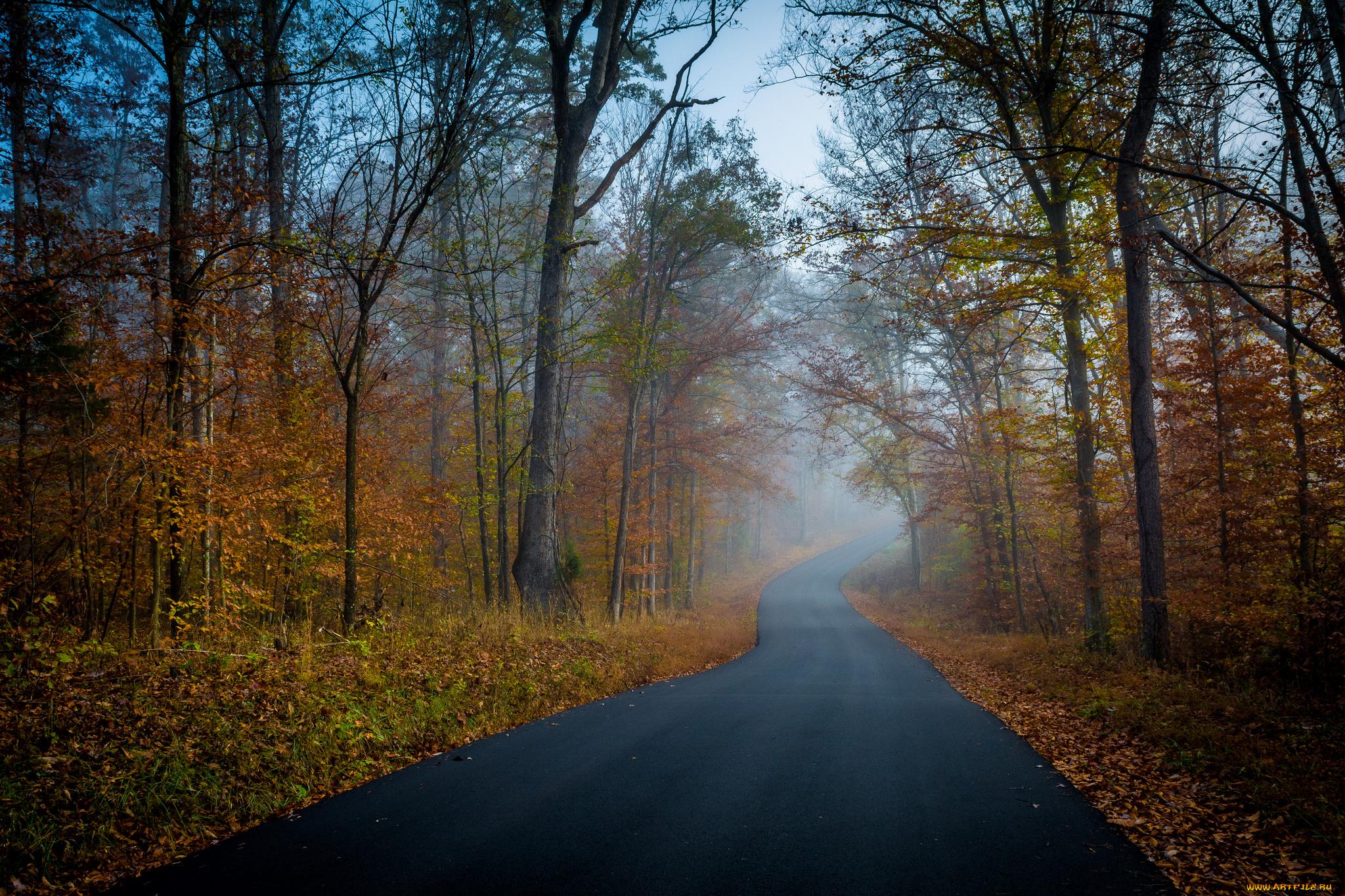 деревья осень дорога бесплатно