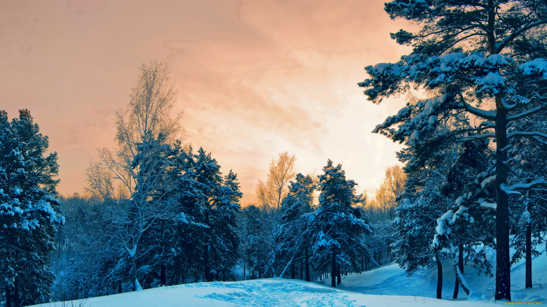 природа зима небо деревья на телефон