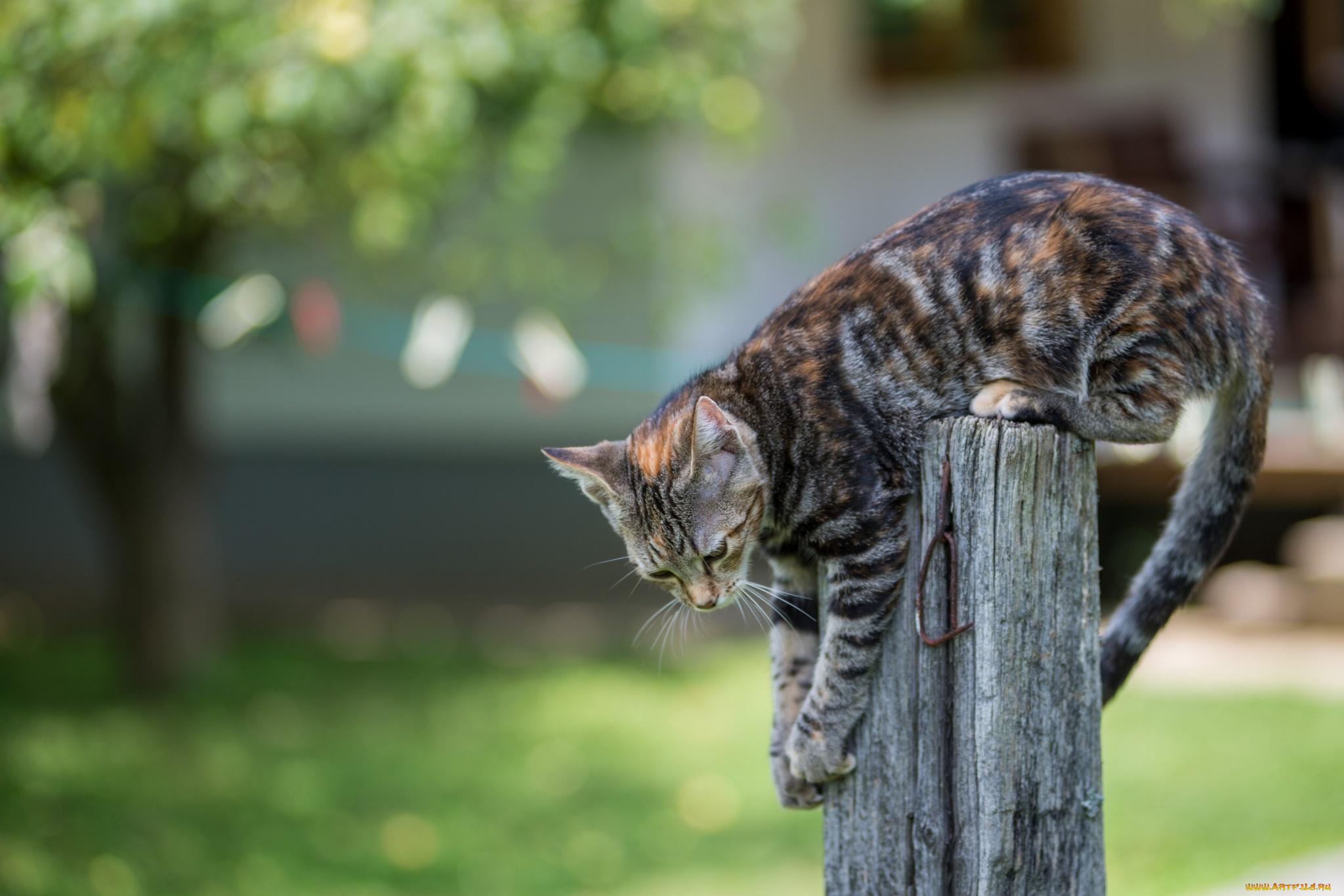 Кот забор под забором скачать