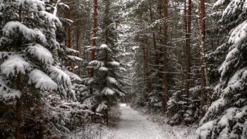 Картинка природа дороги лес дорога снег