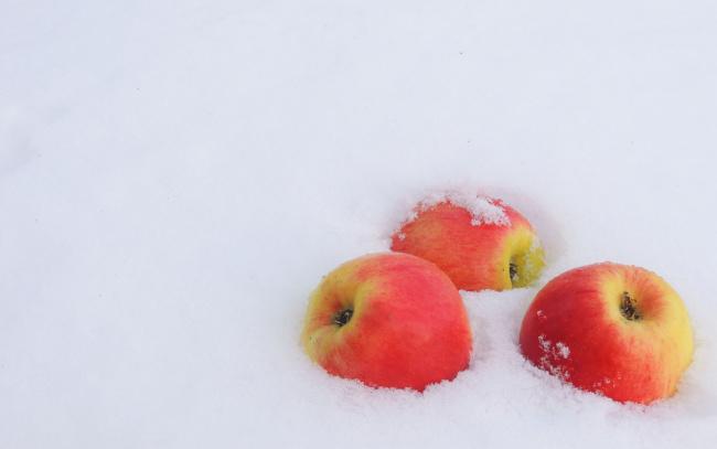 Обои картинки фото еда, Яблоки, румяные, плоды, трио, снег