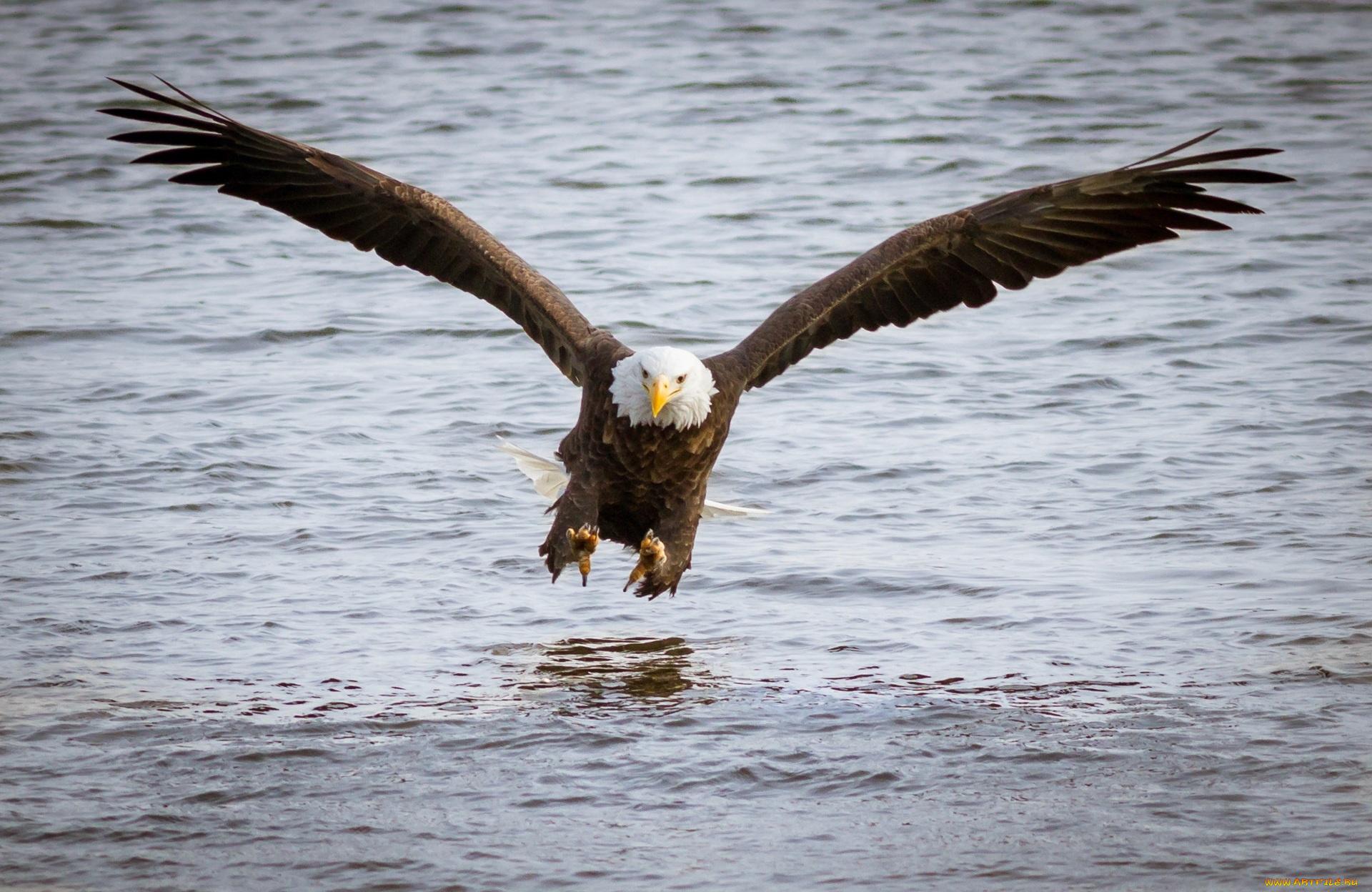 орел полет вода загрузить