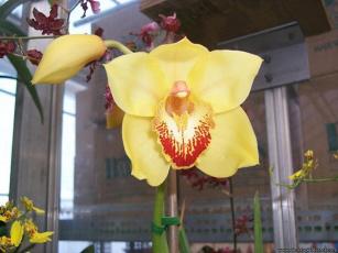 обоя цветы, орхидеи