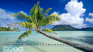 обоя календари, природа, пальма