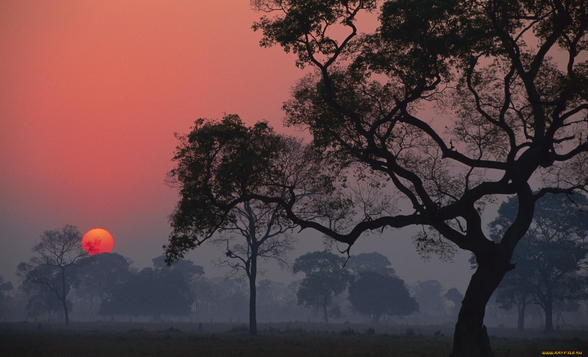 природа рассвет деревья  № 1158295  скачать