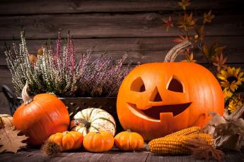 обоя праздничные, хэллоуин, вереск, кукуруза, тыквы
