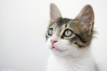 Картинка животные коты мордочка котенок