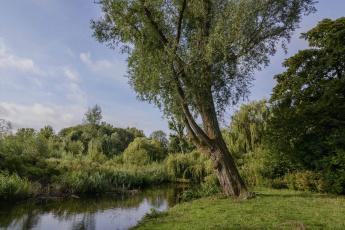Картинка природа реки озера лес река