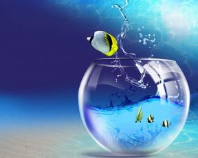 обоя разное, компьютерный дизайн, прыжок, рыбы, аквариум