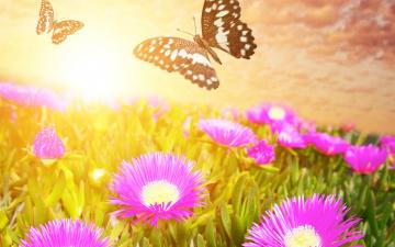 обоя разное, компьютерный дизайн, луг, цветы, бабочки