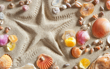 обоя разное, ракушки,  кораллы,  декоративные и spa-камни, песок, звезда