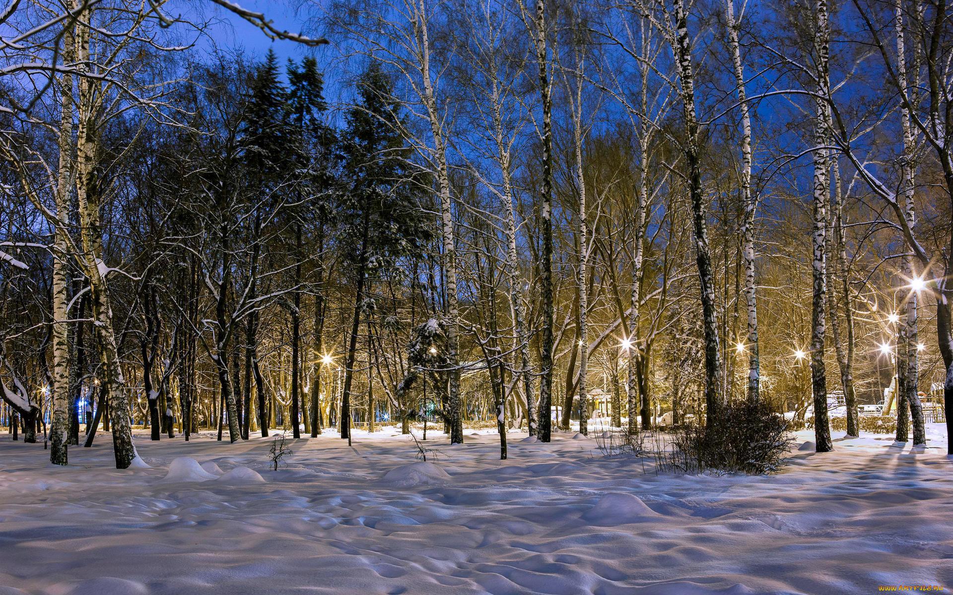 картинки зимнего парка элемент его важен