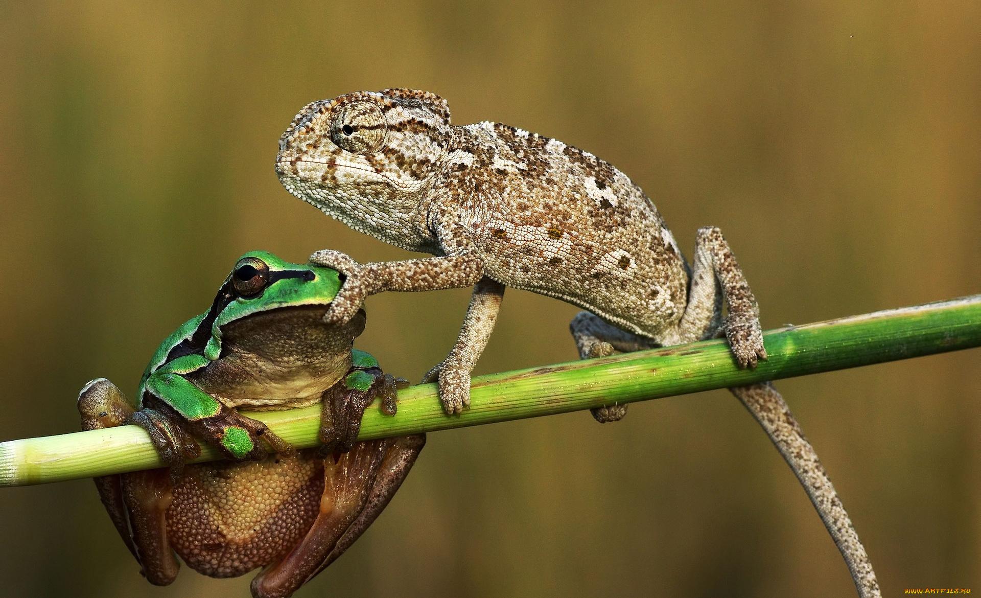 Прикольные картинки ящерица