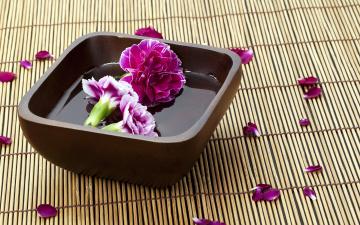 обоя цветы, гвоздики, бутоны, лепестки, миска, вода