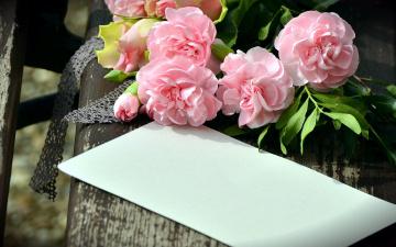 обоя цветы, гвоздики, конверт, розовый