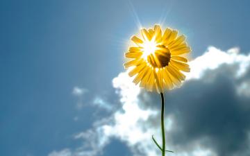 обоя цветы, ромашки, небо, цветок