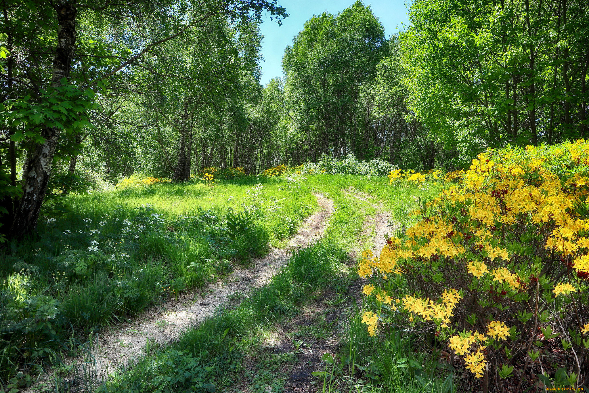 картинки лесные просторы впервые увидел мариту