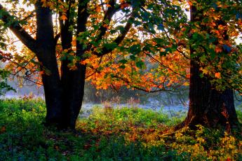 Картинка германия ульм природа реки озера река осень