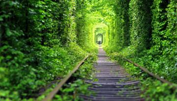 Картинка разное транспортные+средства+и+магистрали зелень шпалы железная дорога рельсы лес
