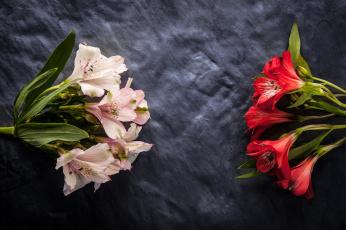 обоя цветы, альстромерия, соцветия