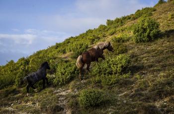 обоя животные, лошади, двое