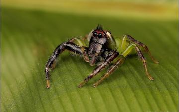 обоя животные, пауки, макро, лист, паук