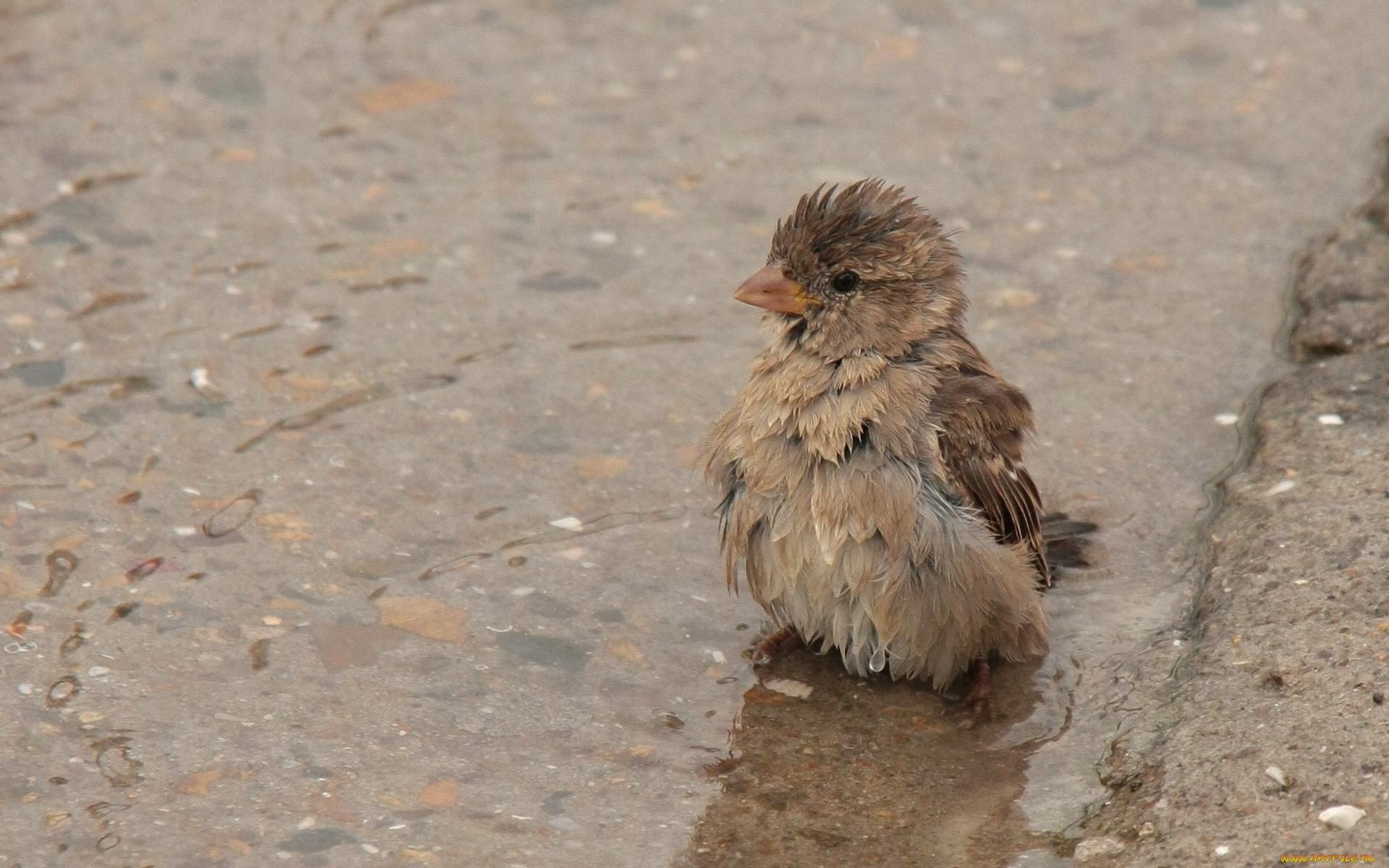 мокрая птичка без смс
