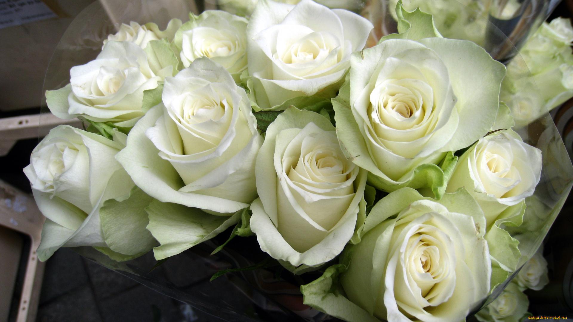 зрелищные моменты на рабочий стол фото белых роз букет свое