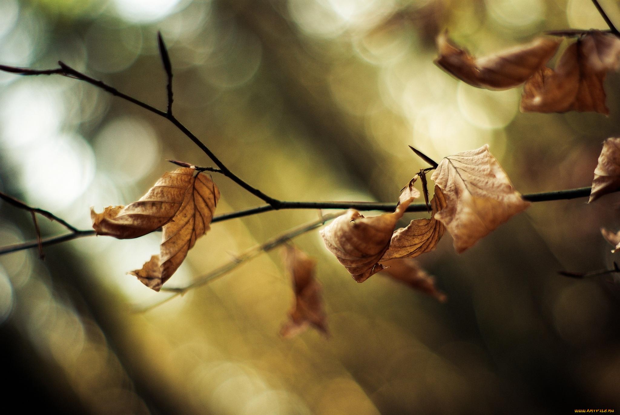природа ветка листья nature branch leaves  № 2350 бесплатно