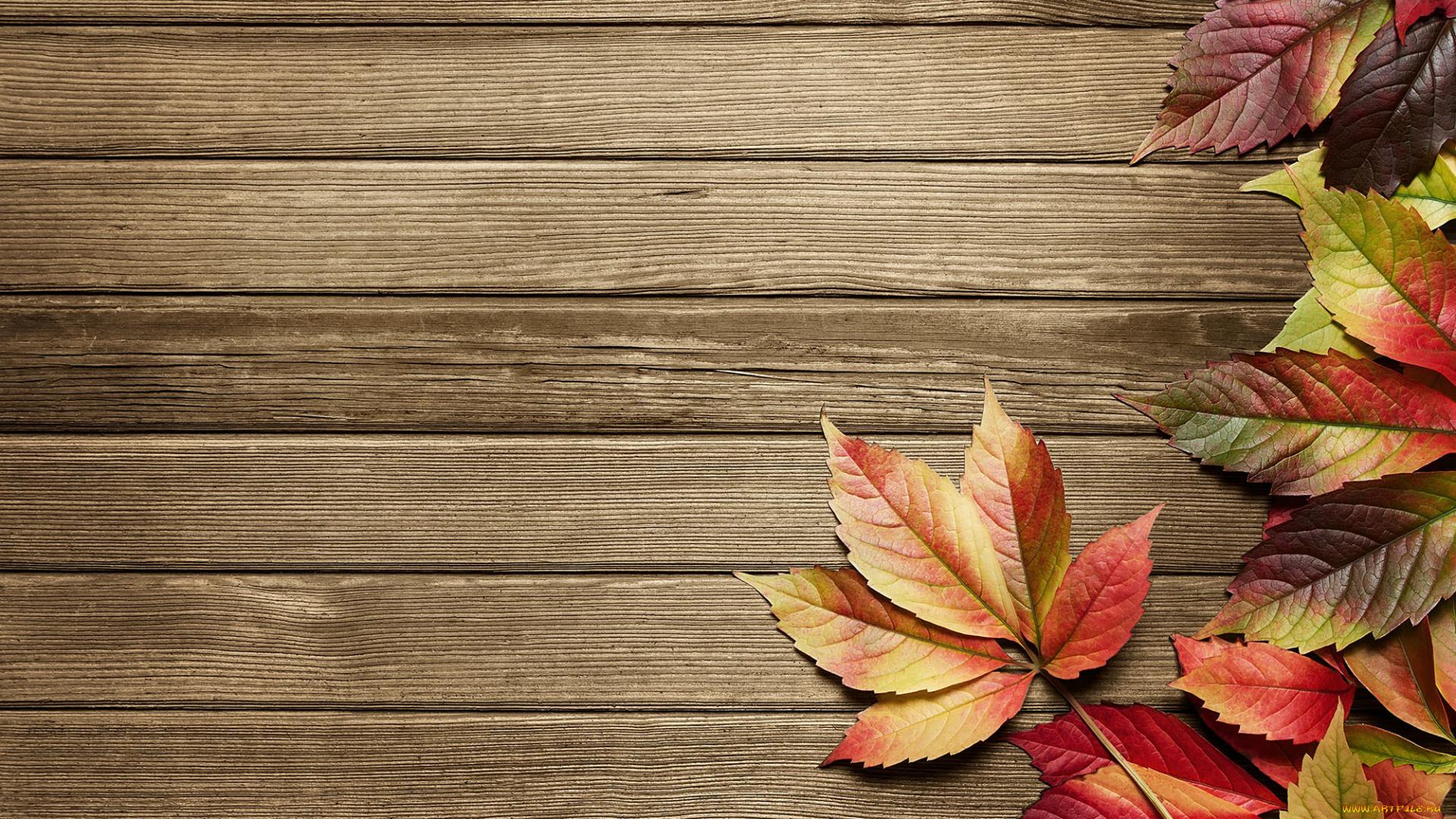 Листья на досках без смс