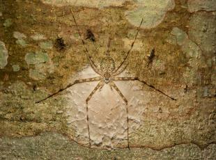 обоя животные, пауки, паук