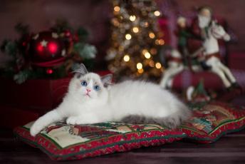 обоя животные, коты, лежит, рождество, голубоглазый, лапуля, санта, клаус, пушистый, боке, комната, игрушки, огни, ёлка, котенок, милашка, подушки, новый, год, кошка