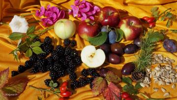 обоя еда, фрукты,  ягоды, ягоды, сливы, ежевика, шиповник