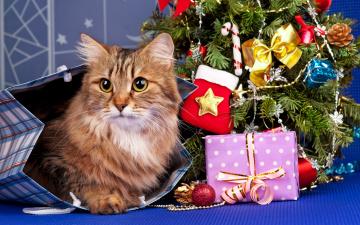 обоя животные, коты, кошка, подарки, праздник, рыжая, игрушки, пакет, елка, новый, год, кот