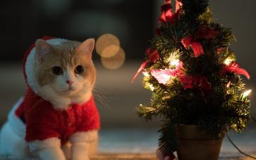 обоя животные, коты, новый, год
