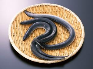 Картинка еда рыба морепродукты суши роллы