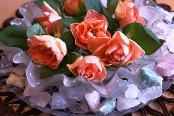 Картинка цветы розы