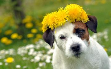 Картинка животные собаки собака цветы лето