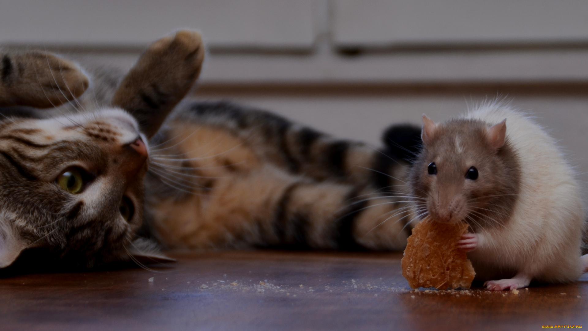 картинка кот с мышкой на голове