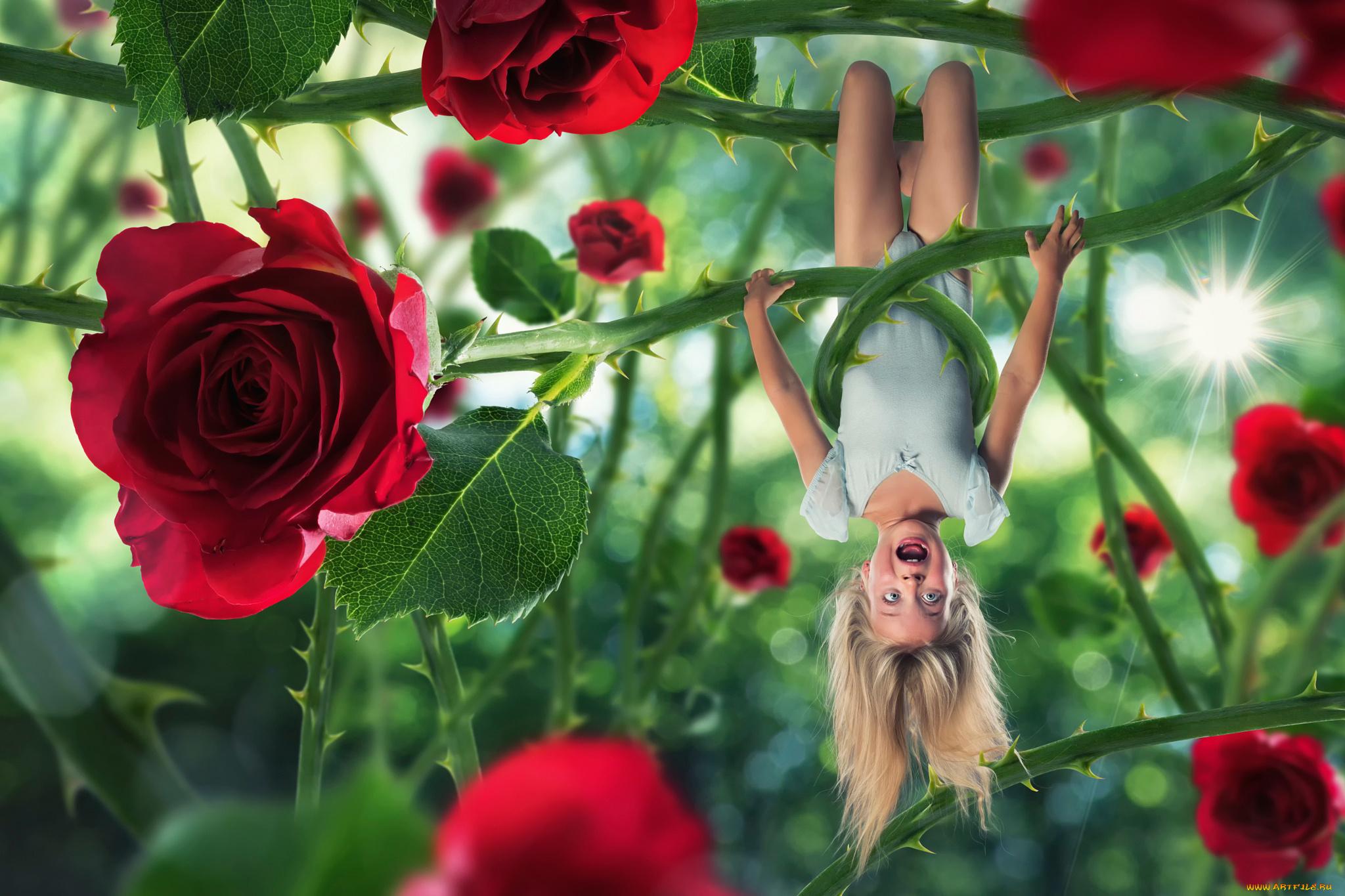 Дошкольного, розы картинки и смешные