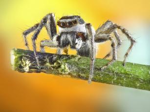 обоя животные, пауки, паучок