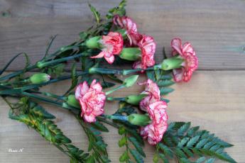 обоя цветы, гвоздики, пестрый