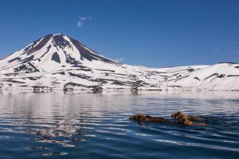 обоя животные, медведи, заплыв, камчатка, природа, горы, снег, вода