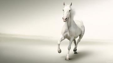 обоя животные, лошади, лошадь, конь, белый, галоп