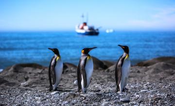 обоя животные, пингвины, камни, корабль, море, берег
