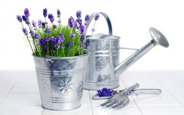 обоя цветы, лаванда, ведро, лейка, лиловый