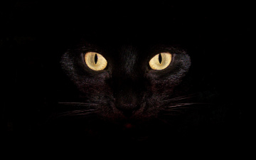 обоя животные, коты, кошка, кот, глаза, черный