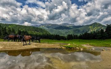 обоя животные, лошади, горы, река